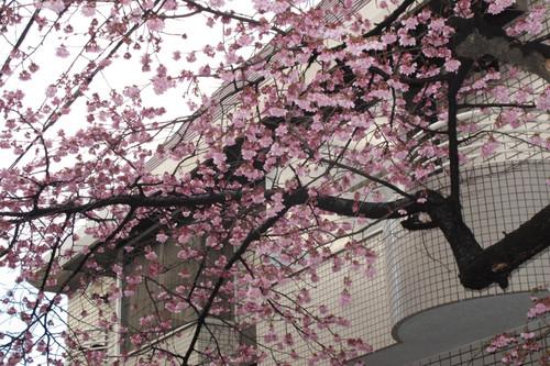 ひと足早く春
